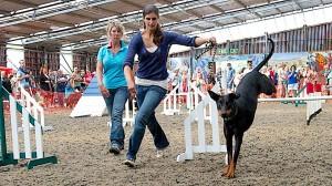 2014 dog show agility dobie