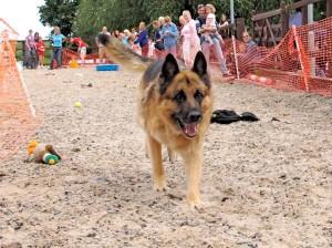2014 dog show fastest recall